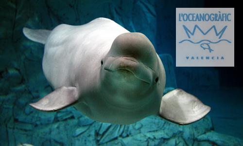 Oferta para visitar Valencia en el 10º Aniversario del Oceanogràfic
