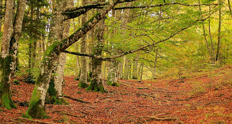 La Selva de Irati, una visita única en otoño