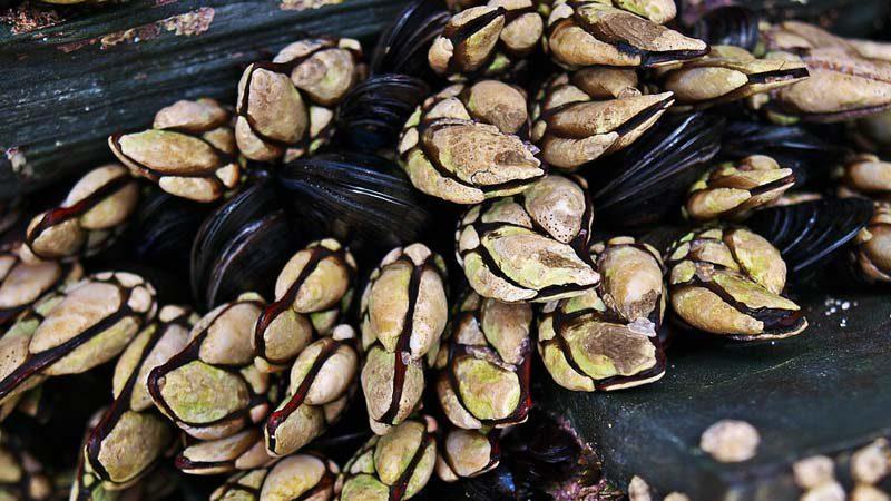Descubre la gastronomía gallega